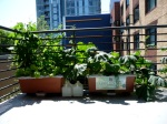 Balcony Gardening at Affordable Housing